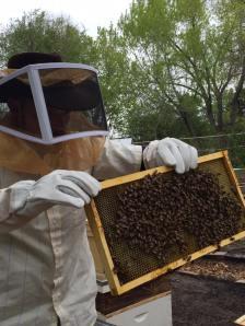 Beekeeping - Paul