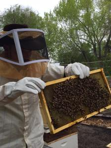 Beekeeping - Paul